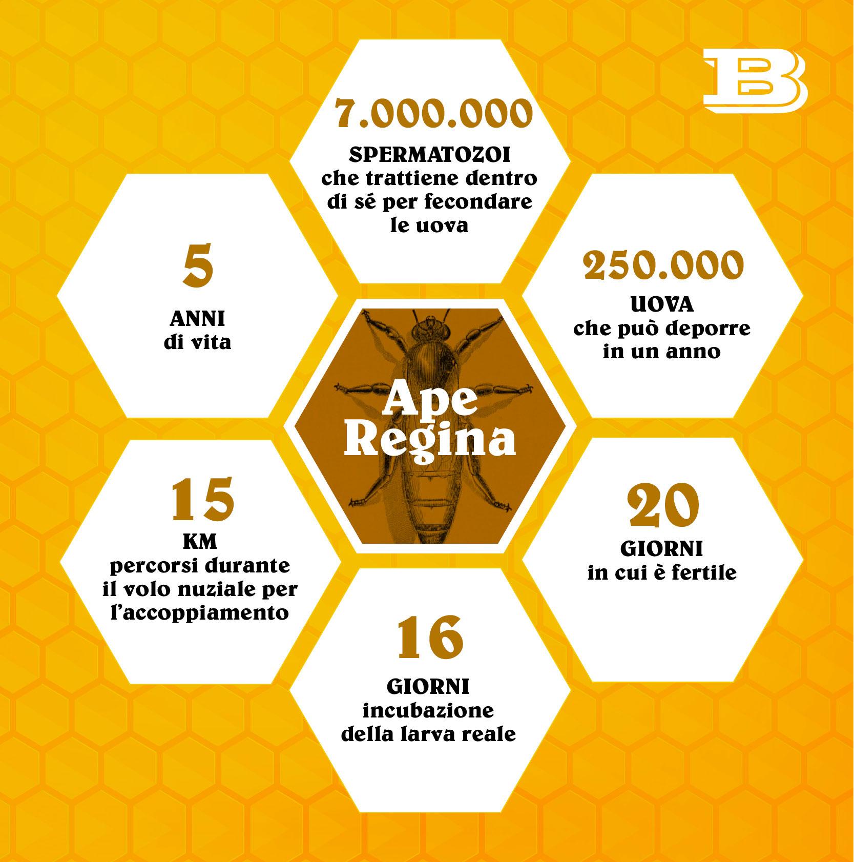 Numeri delle api
