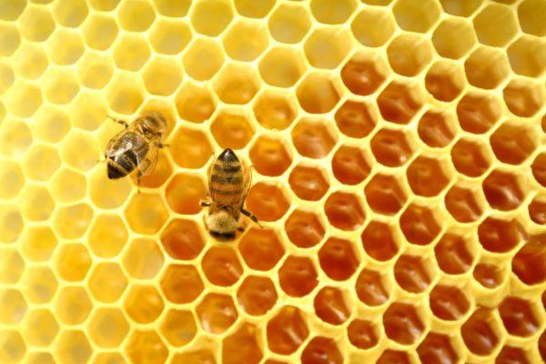 storia del miele